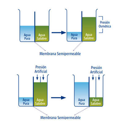 membranasemipermeable